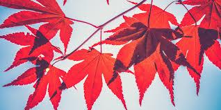 When does <b>autumn</b> start? - Met <b>Office</b>