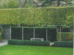 Small Picture Best 10 Hedges ideas on Pinterest Hedge fence ideas Hedges