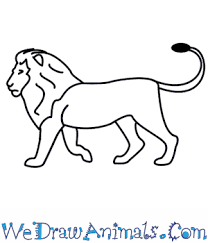 lion drawing. Brilliant Drawing And Lion Drawing A