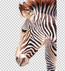horses watercolor painting zebra zebra ilration png clipart