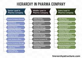 Pharmaceutical Company Organizational Chart Hierarchy In Pharma Company Company Structure Pharma