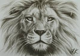 easy lion drawings in pencil. Unique Drawings Lion Drawing And Easy Lion Drawings In Pencil W