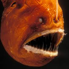 Anglerfish National Geographic