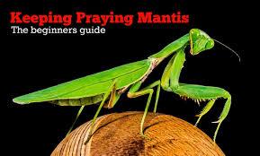 Keeping Praying Mantis As Pets Complete Beginners Guide