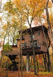 tree house pictures. AU 2010 131 Tree House Pictures