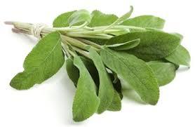 Αποτέλεσμα εικόνας για φασκομηλο φυτο