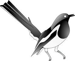 Small Picture Oriental Magpie Robin Clip Art at Clkercom vector clip art