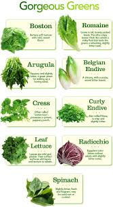 Lettuce Types Chart Types Of Greens Chart Different Types Of Lettuce And In 2019