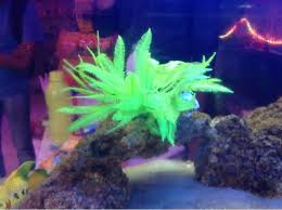 Small Picture Royal Aquarium Pet Shop Bejai Mangalore Pet Shops Justdial