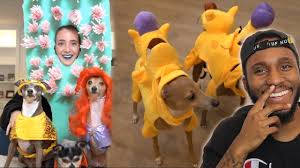jenna marbles my dogs try on halloween costumes 2 reaction