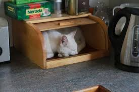 Cat In Bread Box Simple Cat In A Bread Box