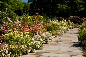 Small Picture Garden Design Garden Design with Roses Garden Design Ideas Home