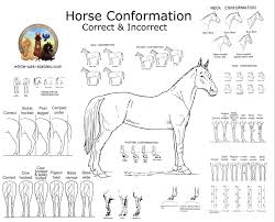 Visual Horse Conformation White Oak Stables
