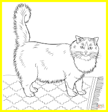 ragdoll animal coloring pages