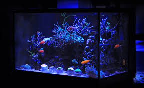 Freshwater Fish Tank Temperature Chart What Size Fish Tank Should I Get Fishkeeping World