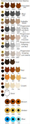Dog Fur Colors Goldenacresdogs Com