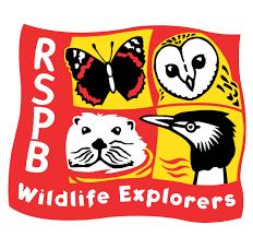 Image result for rspb crafts