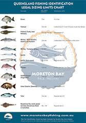 Fish Size Chart Qld Fish Size Limits Chart Moreton Bay Able Anglers
