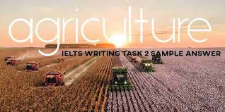 ielts writing task 2 sle answer
