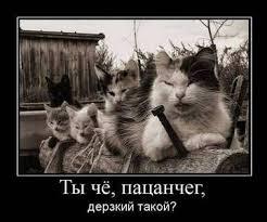Друг Порошенко через офшорную авиакомпанию осуществляет запрещенные рейсы в РФ, – СМИ. ВИДЕО - Цензор.НЕТ 8727