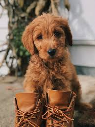 Qumy Dog Boots Size Chart Best Dog Boots Smartdogstuff Com