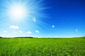 fresh green grass with bright blue sky Laurinda On Leadership