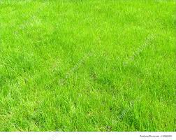 grass field from above. Green Grass Texture Background: Field Of Field From Above S
