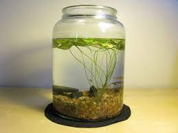 repurpose water garden ideas