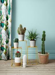 Indoor Desert Plant Decoration