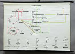 Details About Pull Down Health Wall Chart Metabolism Nutrition Carbohydrates Proteins Fats