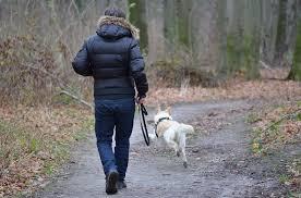 Image result for man dog walking