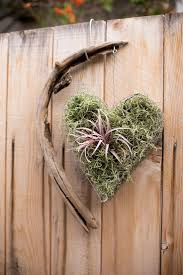Air Plant Display 325 Best Tillandsia Images On Pinterest Plants Air Plants And