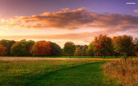grass field sunset. OriginalWide Trees Grass Field Cloud Sunset Wallpapers