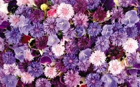 Aesthetic Floral Desktop Wallpaper