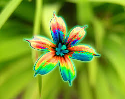 Brightly-Colored-Flower