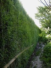 Living Privacy Fence Natural And Beautiful Living Willow Fence Thegreenbarrier