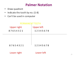 Teeth Types Formula Eruption Ppt Video Online Download