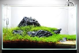 ada nature aquarium step