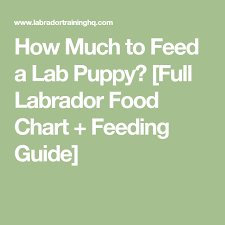 Lab Puppy Food Chart Feeding Your Labrador Puppy What How Much How Often