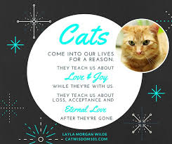 Loss Of A Cat Quotes Mesmerizing Quotes About Losing A Cat Blueridge Wallpapers