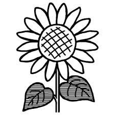 ヒマワリ向日葵1夏の花無料白黒イラスト素材