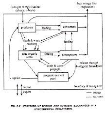 Energy Flow Processes Operation And Energy Flow In
