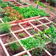 veggie garden ideas square foot veggie garden ideas amazing container vegetable
