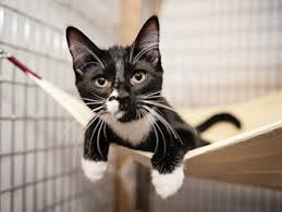 petco cats for sale. Fine Cats Along With Our Petco Adoption Center KC Pet Project Now Has Adoptable Cats  In Seven Metro Area Stores Throughout Cats For Sale