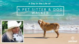 A Day In The Life Of A Pet Sitter Dog Walker With Petcloud Blog