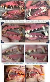 Dog Teeth Health Chart Dental Health Newton Animal Clinic