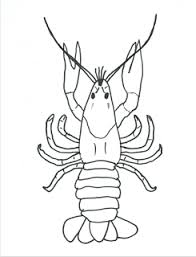 Crayfish top view?resize=245%2C320 how to draw a crayfish & crayfish anatomy half a hundred acre wood on crayfish worksheet