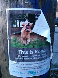 dog walking advertising 5 marketing lessons from the neighborhood dog walker video review