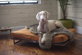 modern pet furniture. view in gallery drayton_pet_bed_lounger_by_architect_pets_01_grande modern pet furniture p
