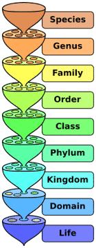 The Linnaean System Advanced Ck 12 Foundation